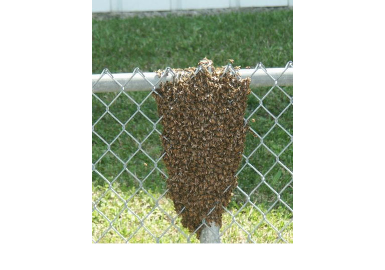 swarm in a chain link fence
